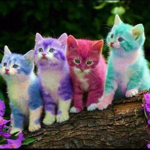 Show Me Pictures Of Rainbow Cats