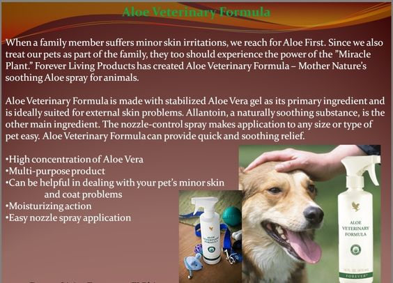 Aloe Veterinary Formula is made with stabilized Aloe Vera gel as its primary ingredient and is ideally suited for minor external abrasions or irritations. Allantoin, a naturally soothing substance, is the other main ingredient. The nozzle-control spray makes application to any size or type of pet easy. Aloe Veterinary Formula can provide quick and soothing relief.Order at  http://www.barbara-miller.flpg.de/