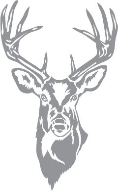 Glass etching stencil of Whitetail Buck. In category: North American Mammals