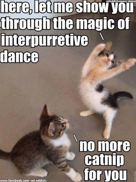 Catnip Meme Something Silly Funny Cat Memes Funny Animal Jokes Funny Animal Quotes