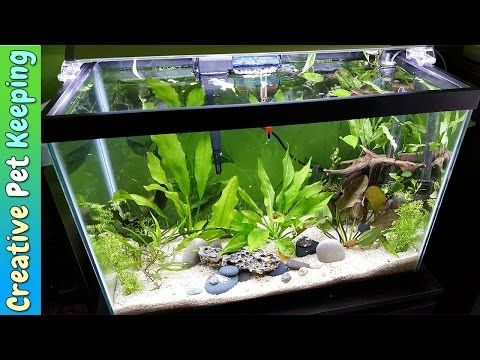 How To Setup A 20 Gallon Planted Aquarium Substrate And Supplies Youtube Planted Aquarium