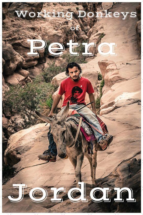 Working Donkey Petra Jordan