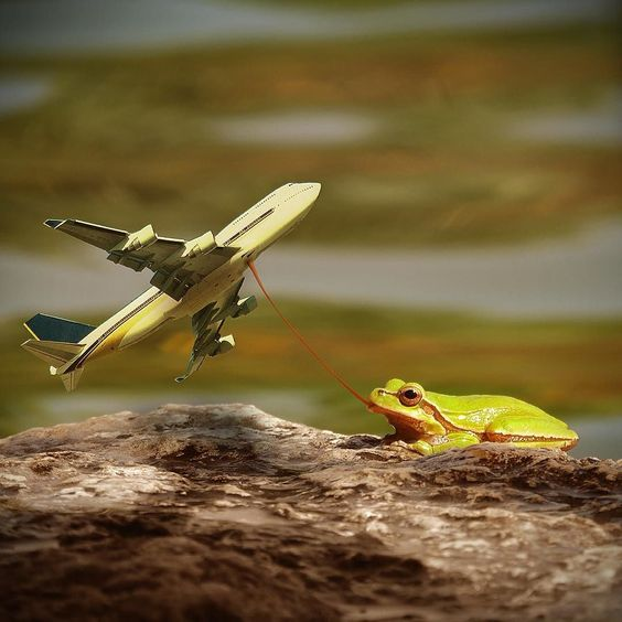 "Being stupid rocks  Had to share this lil edit I made as a joke for my friends who say I keep pasting planes everywhere. I say ""frogs are boring without a good story to tell"" ;) by insta4gram"