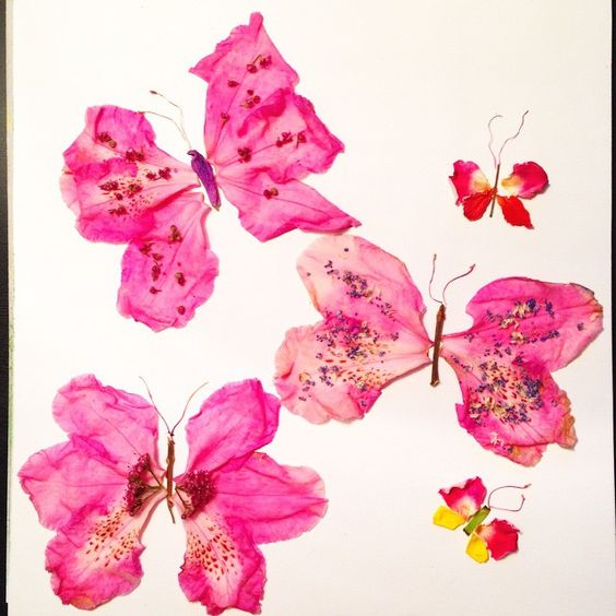 #inspiration #floral #flower #butterfly #pink #nature @natgeo @natgeocreative #art #drawing @instagram @arts_help #facethefoliage