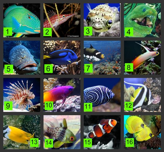 Can you name these saltwater fish water dwellers pinterest names game and your name for Saltwater fish names