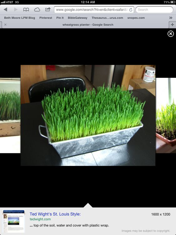 I want to grow my own wheat grass!