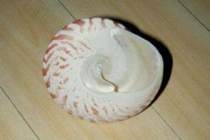 貝の採集と標本作成法