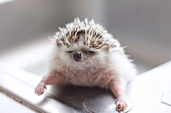 Ever have one of those days! #hedgehog