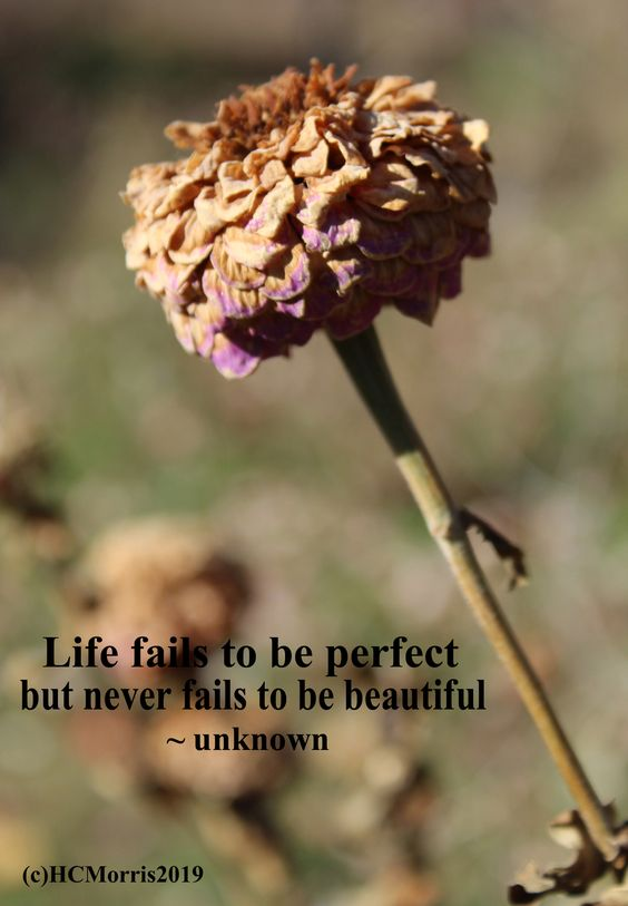 a brown and purple flower with life quote