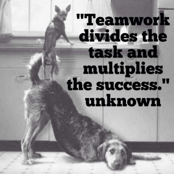 115 Great Team Building Quotes Team