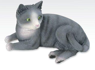 buy kittens online usa