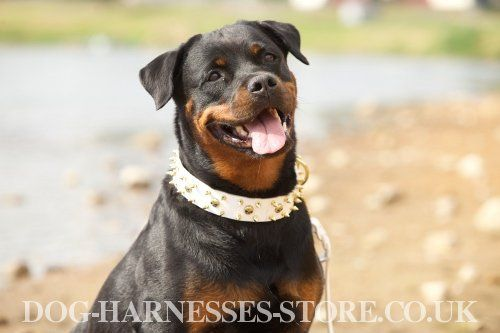Well Made Training Rottweiler Harness 59 90 Www All About