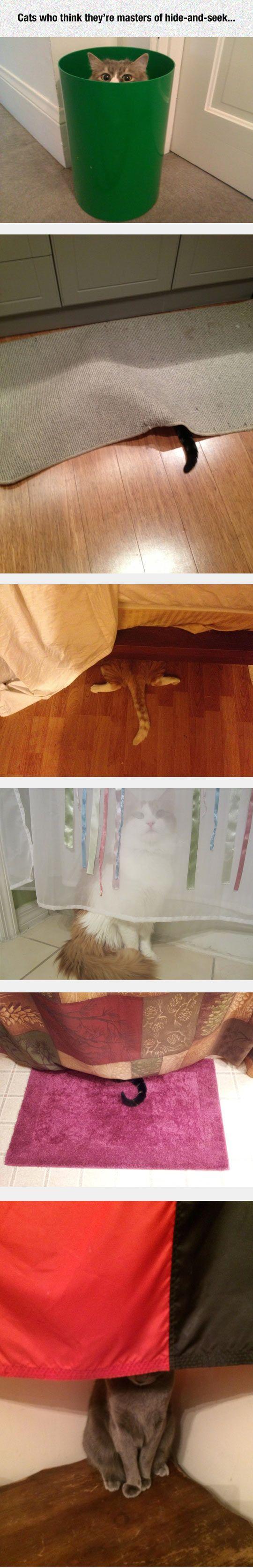 """Les chats qui se croient """"cachés"""" LOL..."""