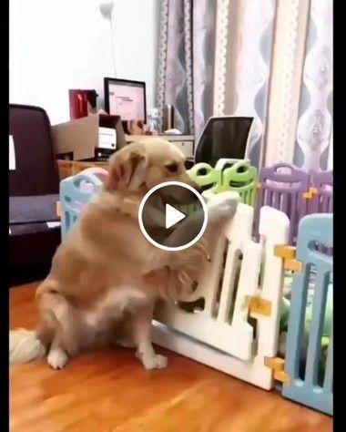 Cachorrinhos Educados em fileira.