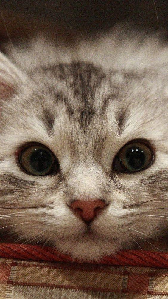 Esa mirada cuando sabes que harán algo malo.