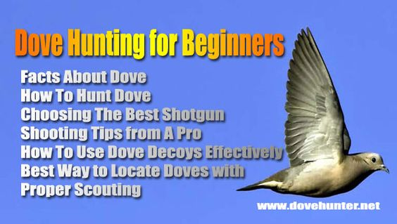 tips in placing dove decoys for a successful dove hunting, revealed!