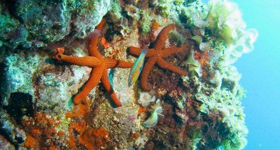 Bucear en la Reserva Marina Isla de Tabarca es una experiencia única que permite adentrarse en el más puro ambiente Mediteráneo, siendo ésta un foco de conservación de la biodiversidad de la zona que nos permitecontemplar en su hábitat natural auna amplia cantidad de peces, algas, invertebrados y todo tipo de habitantes marinos.