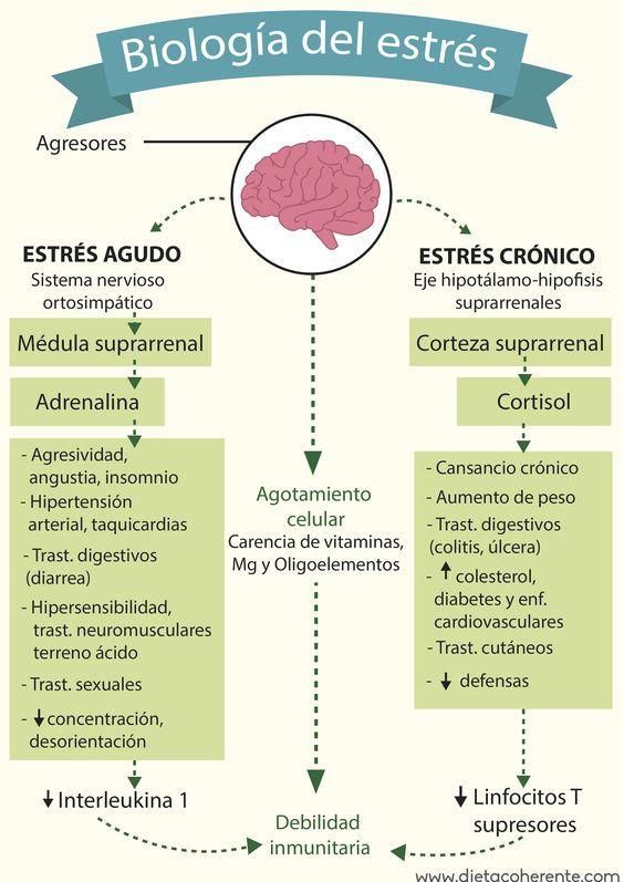 Biologia del estrés. Aprende qué tipo de estrés es el tuyo