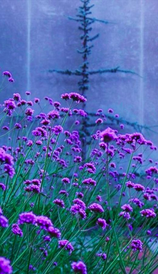Bokeh in lavender • photo: Eric M Schiabor on RedBubble ...beautiful <3