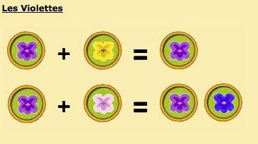 Guide.creation de fleur hybride: les violettes