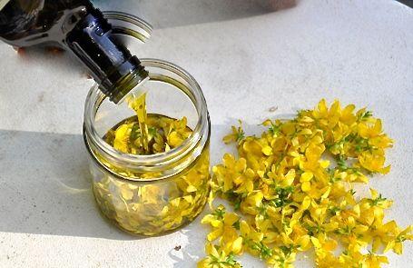 Rezept zur Herstellung von Johanniskraut-Öl: Man nimmt dafür eine sterilisierte, helle Flasche aus Glas. Diese füllt man zu einem Drittel mit den gelben Blüten oder mit Blütenknospen vom Johanniskraut. Jetzt wird die Flasche mit einem hochwertigen Pflanzen-Öl gefüllt (mit kalt gepresstem Olivenöl, Rapsöl oder Leinöl). Danach wird die Flasche fest verschlossen und muss nun 6 Wochen lang an einem sonnigen Platz ( am Fenster) stehen. In dieser Zeit bekommt das Öl aus dem roten Blütensaft eine…
