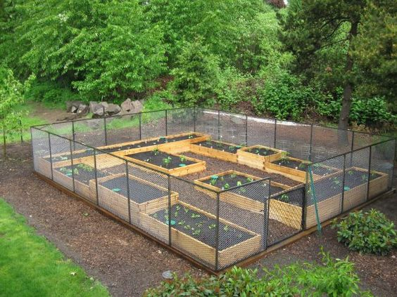 Raised bed gardens with awesome animal deterrent fence.