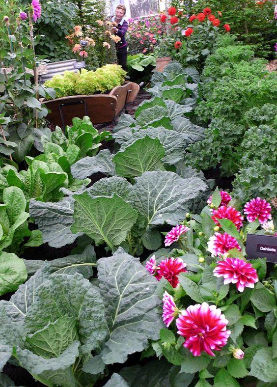 Edible Landscaping: Kitchen Garden - Chelsea | jardin potager | bauerngarten | köksträdgård