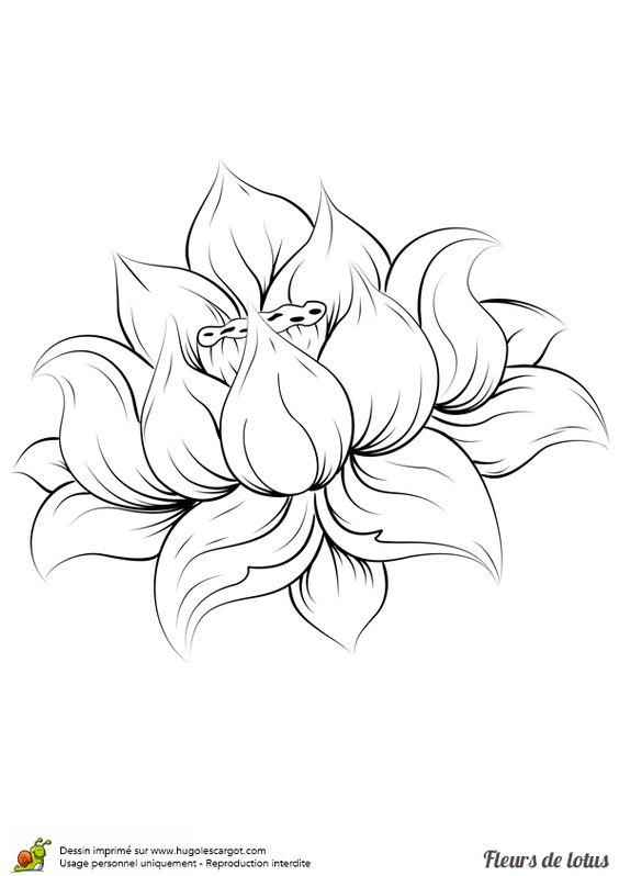 Dessiner Une Fleur De Lotus Colorier Les Enfants