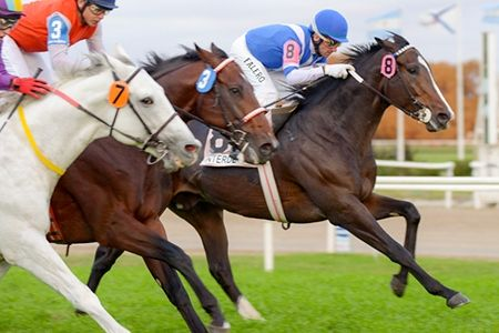 Interdetto (ARG) 2011 B.c. (Roman Ruler (USA)-Inclusa (ARG) by Slew Gin Fizz (USA) 1st Clasico Forli (ARG-G2,1800mT,San Isidro)