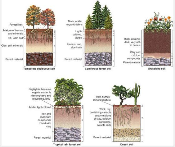 Soil types in various biomes 39 garden coach 39 s blog for for Different types of soil and their characteristics