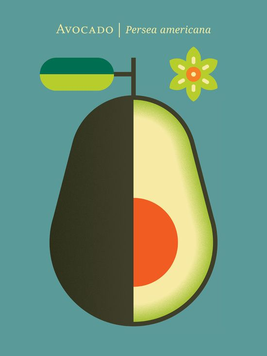 Christopher Dina, Fruit: Avocado Art Print