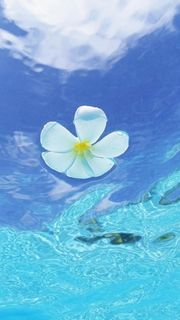 Flowers floating on the water
