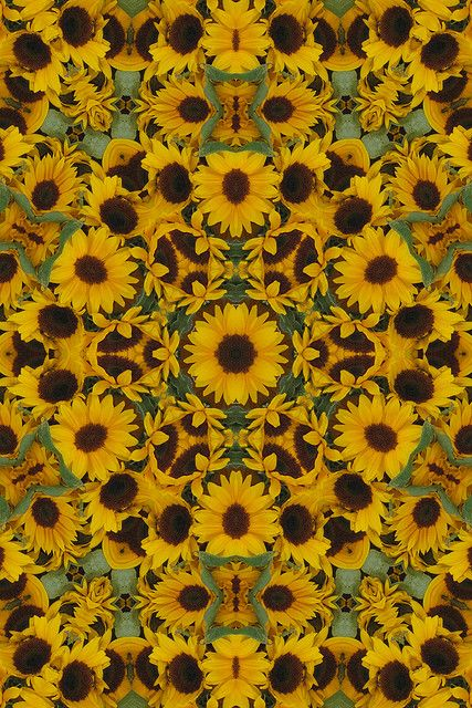 Sunflower Tumblr Backgrounds Images 6 HD Wallpapers