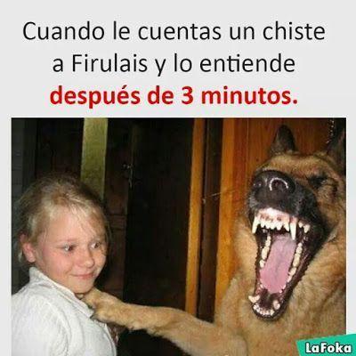 Perros Graciosos Http Enviarpostales Es Perros Graciosos 183 Perros Animales Memes Pinterest Memes Funny Spanish Memes