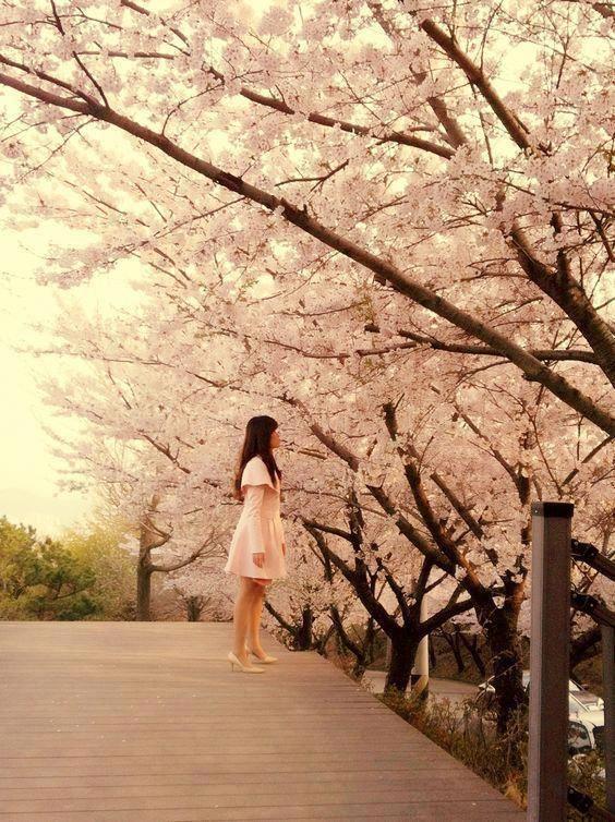 Cherry Blossom Busan Korea Koreanliving Koreanlife Lifeinkorea Fashioninkorea South Korea Travel South Korea Korea Travel