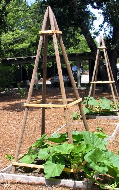 how to build a vertical veggie patch with pvc piping