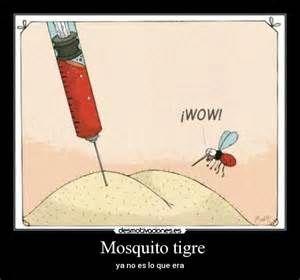 Resultado de imagen de mosquitos chiste