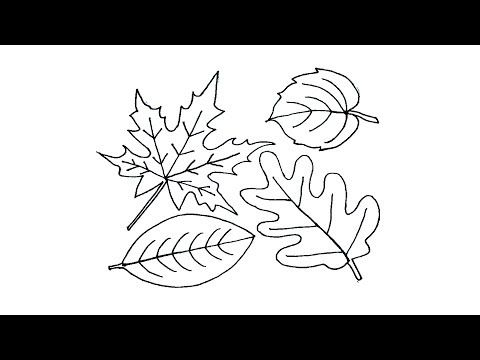 How To Draw A Leaf Easy Easy Drawings Leaf Drawing Drawing Tutorial Easy