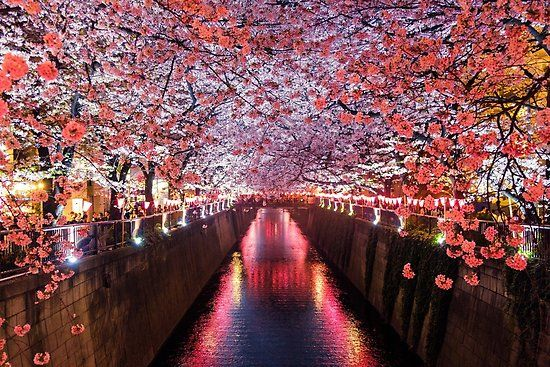 Meguro River Matsuno Japan Poster By Kiguni In 2021 Cherry Blossom Japan Tokyo Picture Japan Picture