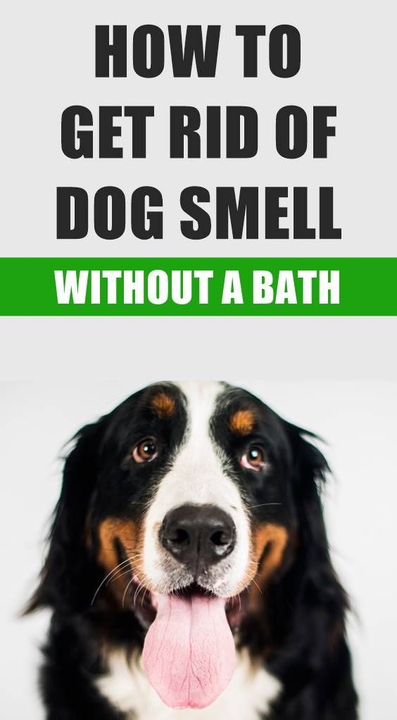 Living With Our Pets Often Means Our House Begins To Smell Like