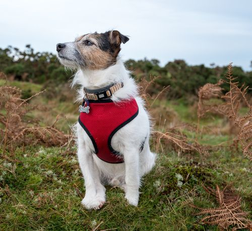 The Dangers of Dog Harnesses [A Must Read!!]