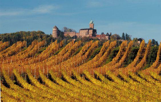 La Route Des Vins D Alsace Eurotelgroup Com Alsace Wine Tour Obernai