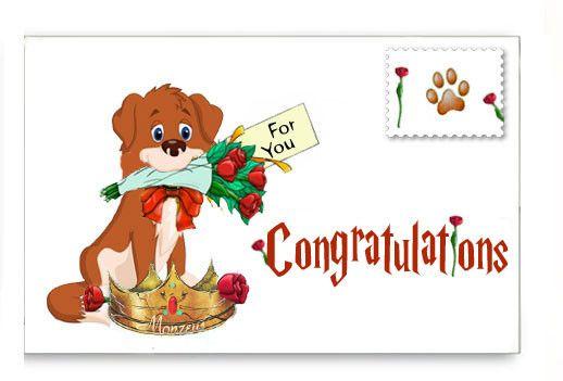 (4) Dog of the Week: ♥DUKE♥