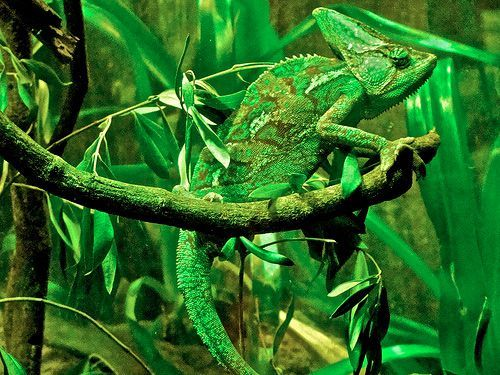 1000  images about Animal Camouflage on Pinterest | Sole fish ...