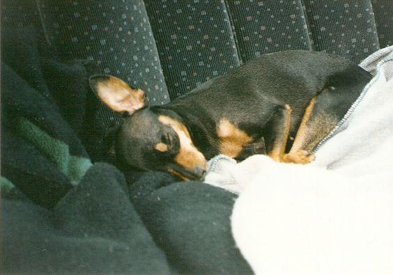 o melhor lugar para dormir é em um carro alemão...