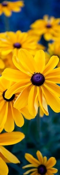 unas hermosas flores amarillas con azul
