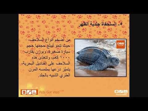 Abu Dhabi Animal Shelter Animal Shelter Animals Dog List