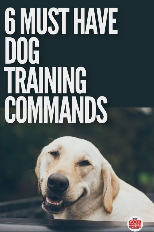 Pin By Potapo On Dog Training Videos Dog Training Dog Clicker