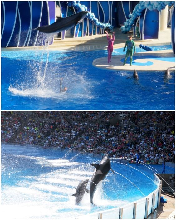 What Are Interesting Places To Visit In Florida: Places To Visit In Florida: SeaWorld Orlando