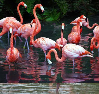 Burung Bangau Burung Flamingo Bangau Burung Binatang Gambar